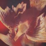 wing spread HP